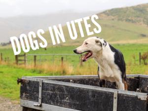 Tips for Restraining Dogs in Utes