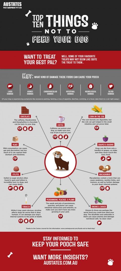 things-not-to-feed-your-dog-austates-image