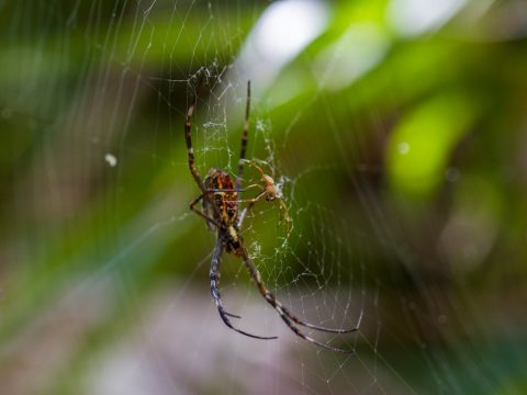 Austates Avoid White Tail Spiders in Brisbane