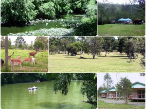 Awesome Camping Spots: Borumba Deer Park