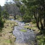Wallaby Flat Camp image