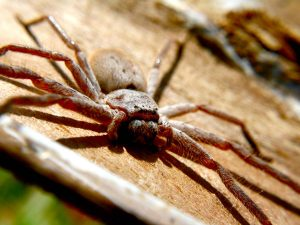 Common spiders you'll find in Australia: deadly, dangerous and harmless