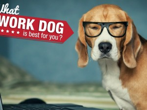 What Work Dog is Best For You?