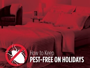 How to Keep Pest-Free on Holidays