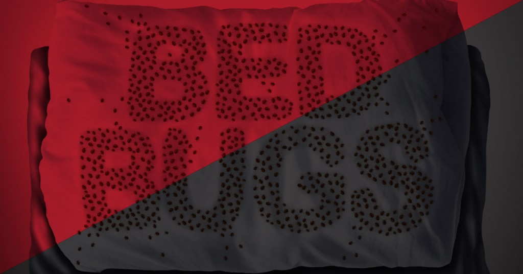 Bed-Bugs-Attracted-to-Black-and-Red-fb-1200x628