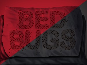 Bed Bugs are Attracted to Black and Red
