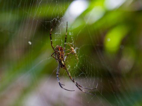 Austates Avoid White Tail Spiders in Brisbane