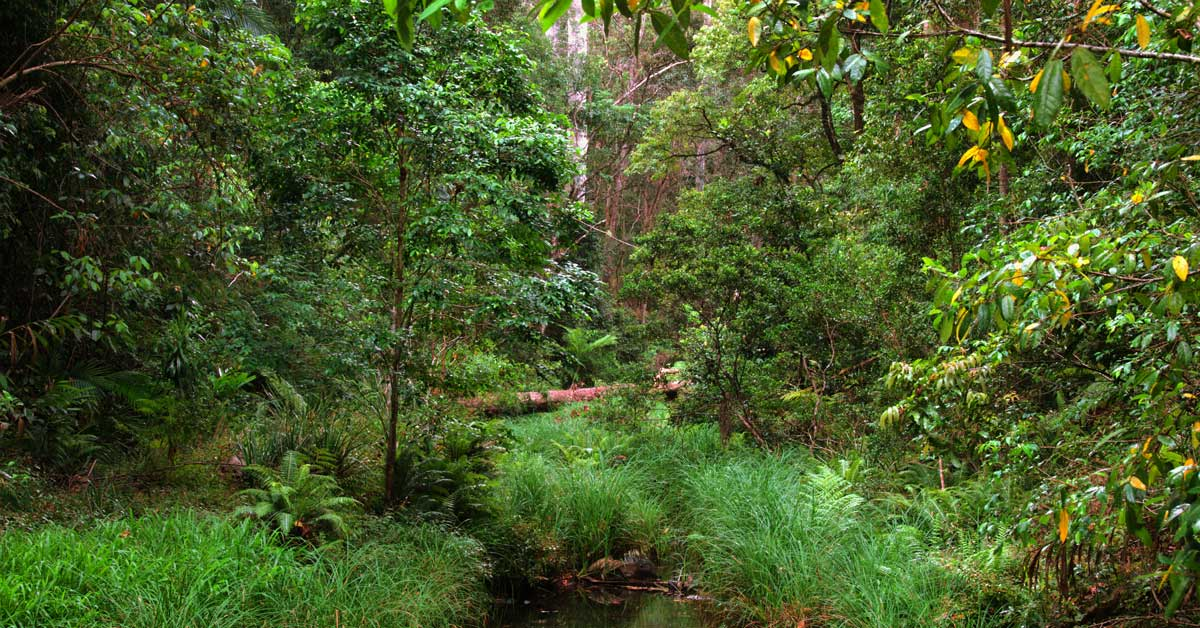 Top 5 4WD tracks in SEQ Conondale National Park