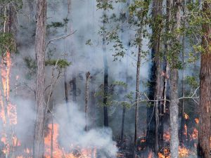 Get ready for bushfire season